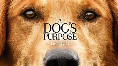 A Dog's Purpose Producer Explains Feelings Over Film's Controversy