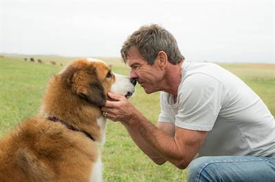 A Dog's Purpose Cleared of Animal Harm on Set