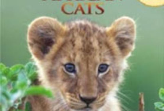 Win a Pair of African Cats Books: Sita the Cheetah & A Lion's Pride From Disneynature's African Cats