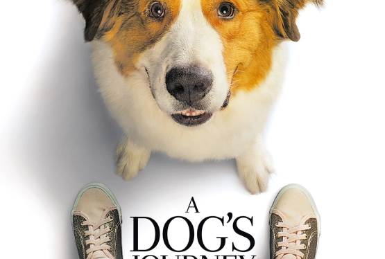 Win Passes For Two To An Advance Screening of Universal Pictures' A Dog's Journey