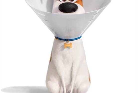 Share Your Pet's Photo and Lives on New Secret Life of Pets 2 Website