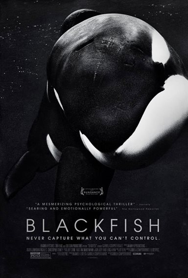 Blackfish © Magnolia Pictures. All Rights Reserved.