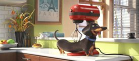 The Secret Life of Pets © Universal Pictures. All Rights Reserved.